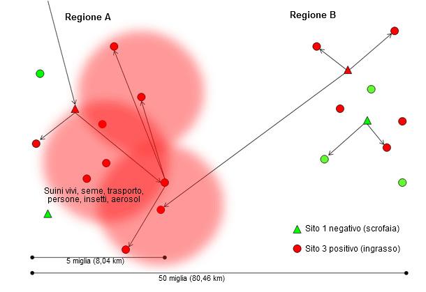 Diseminación de una nueva cepa de virus de PRRS a través de la región A