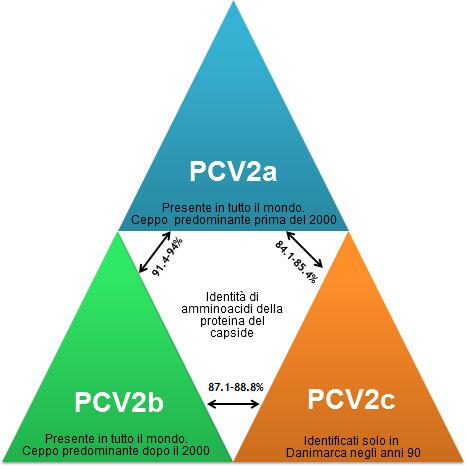 Principales genotipos de PCV2 y su relación en base a los genes de la cápside.
