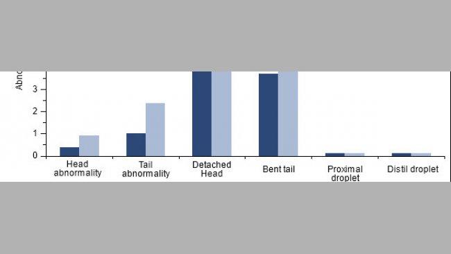 Effetto della vaccinazione dei verri positivi a PCV2 sulla morfologia spermatica