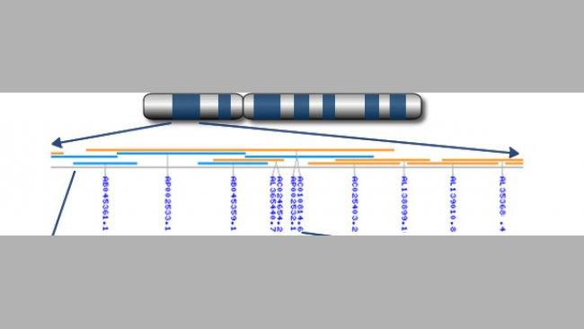 Dai cromosomi ai geni ai nucleotidi.
