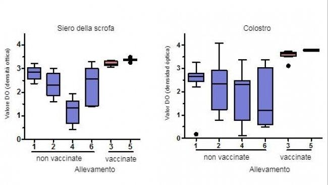 Livelli di anticorpi IgG specifici per PCV2 misurati mediante ELISA nel siero e colostro delle scrofe