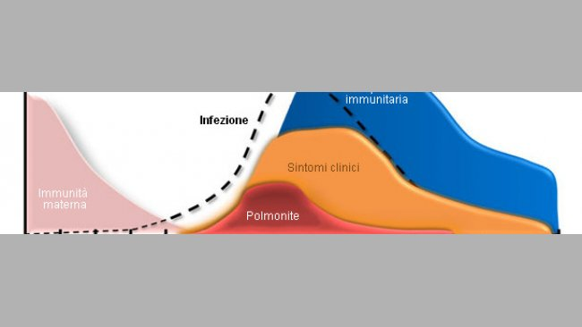 Mycoplasma hyopneumoniae: dynamics of infection and immunity