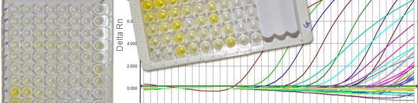 Sierologie per il PCV2 che distinguono  IgM da IgG e la q-PCR che informa la carica virale