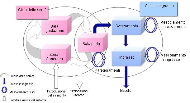Representación del modelo de dinámica de oblación en cerdos