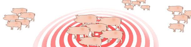 Dinámica de la infección por el virus de influenza en granjas de reproductoras