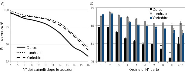 Effect of number after transfer (A) and parity (B) on survival percentage by breed of sow