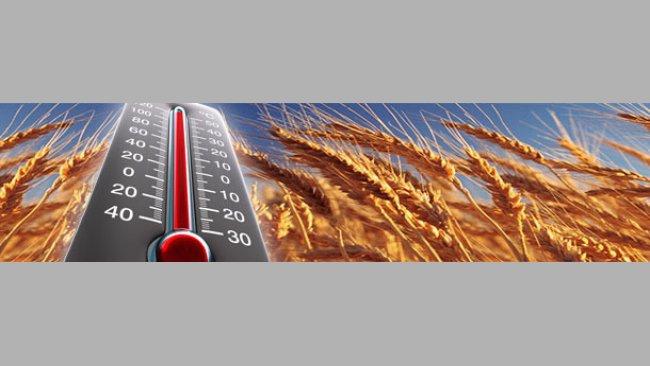 El calor del verano incendia los mercados