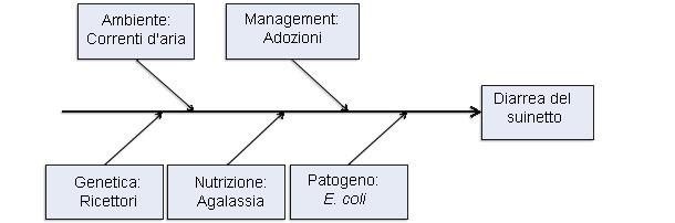 Modello di 5 fattori produttivi come cause di colibacillosi