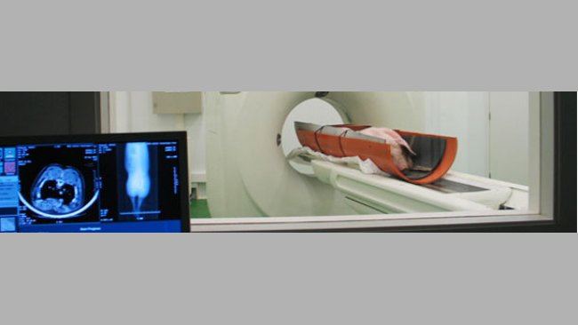 Evaluación de un cerdo vivo con un equipo de tomografía computarizada