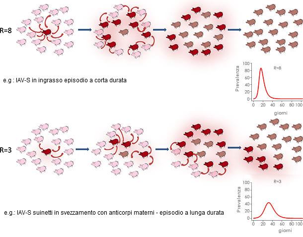 Replicazione virale in un contesto epidemido o endemico