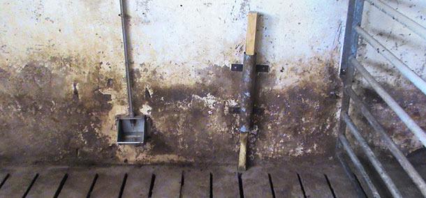Los cerdos manipulan más los objetos colgados a pocos cm del suelo comparado con los que se posicionan a la altura del morro