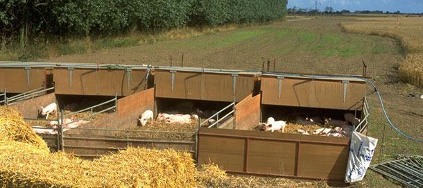Nidos al aire libre donde se alojaban los cerdos desde el destete hasta las 9 semanas de vida