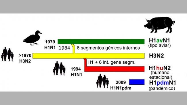 Figura 1. Storia ed origine dei virus dell'influenza suina tipo A (IAV) che attualmente circolano in Europa. Si noti che nessuno di questi IAV suini hanno la loro origine nel suino.
