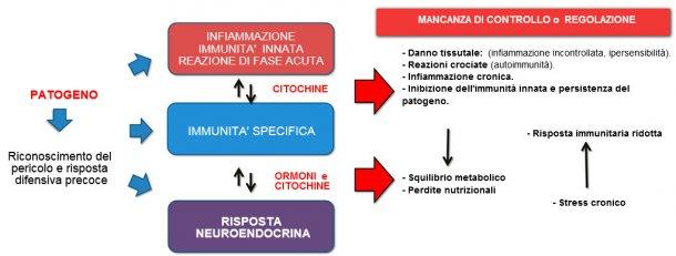Figura 2b: Interazione tra immunità e risposta neuroendocrina nell'evoluzione non controllata della immunità / infiammazione: l'infiammazione cronica o l'infezione persistente sono associate a disturbi metabolici.