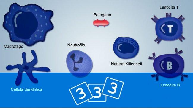 Scopri l'immunologia nella 3tre3