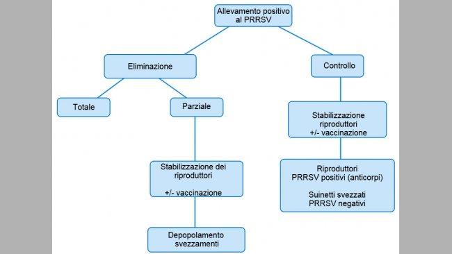 Figura1. Vista esquemática de los distintos planteamientos en granjas PRRSV positivas