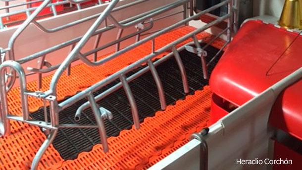 La combinazione più utilizzata è il pavimento in plastica per il suinetto e di materiale metallico fondente per la scrofa.