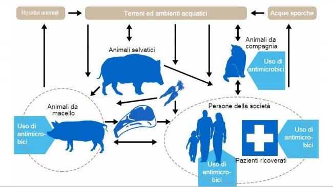 Flussi della resistenza agli antibiotici tra i differenti serbatoi. In blu si indicano i punti di utilizzo degli antibiotici. http://www.effort-against-amr.eu/
