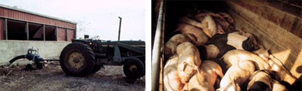 Foto 4: Attenzione quando si muove il liquame. In questo caso gli operatori sono sopravvissuti, i suini no.