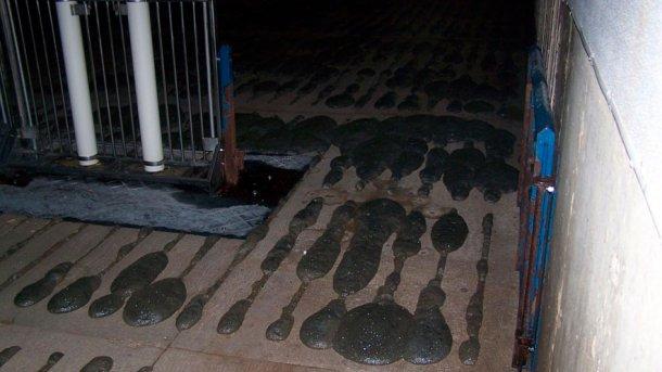 Foto 2: Formazione di schiuma sotto il grigliato.