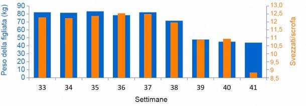 Gráfica 3. Media suinetti svezzati/scrofa e kg per figliata, prima e durante l'episodio diPED (a partire dalla settimana 38).