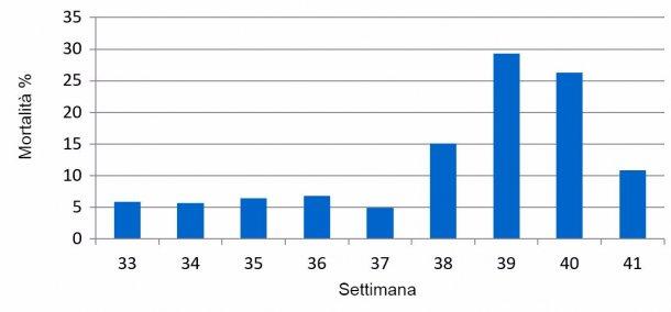 Grafico1. % Mortalità settimanale sottoscrofa, prima e durante l'episodio PED.