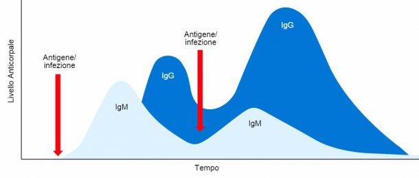 Figura 1: Cambio isotipico e risposta immunitaria primaria e secondaria ad esposizioni precedenti allo stesso antigene.
