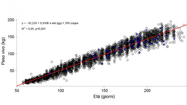 Grafico 1. Evoluzione del peso vivo e l'età delle scrofette zoppe (azzurro) e non zoppe (nero)