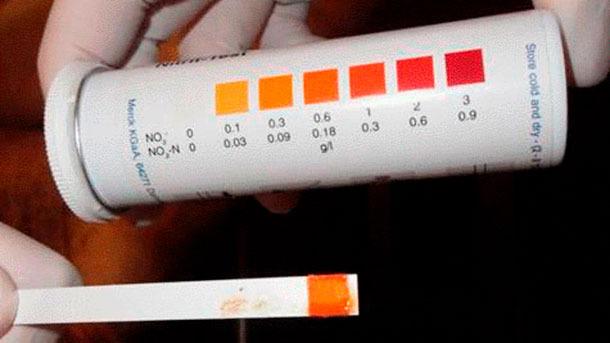Figura 5: Striscia per il rilevamento di nitriti che indicano avvelenamento da nitriti.