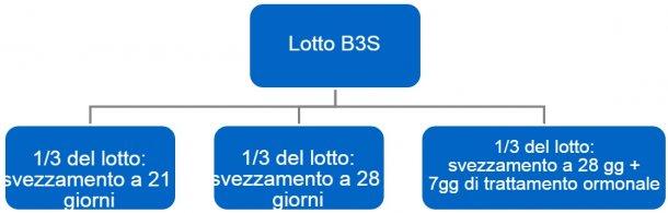 Figura 4. Processo del passaggio dabande a 3 settimane(B3S) a bande settimanali.