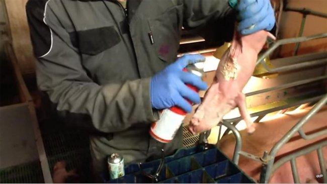 Protezione dei capezzoli con adesivo