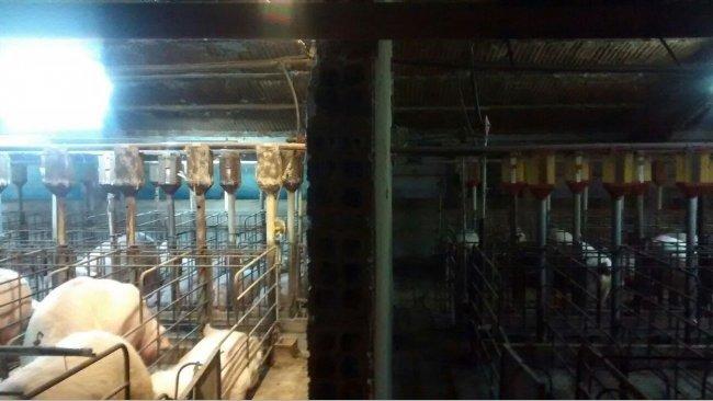 Foto 1. Differenza di illuminazione in gestazione prima e dopo l'installazione di un sistema extra di apporto di luce...