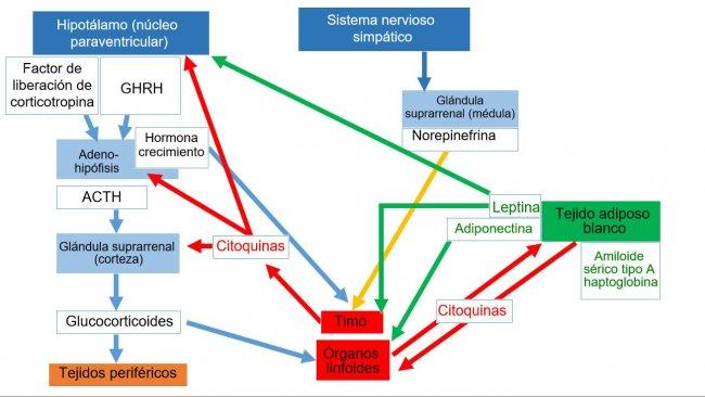 *Sistema neuro-endo-immuneACTH: ormoneadrenocorticotropo* GHRH: ormoneliberatore dell'ormone della crescita.