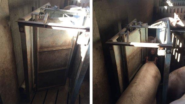 Foto 1. Puertas de salida de la estación de alimentación.