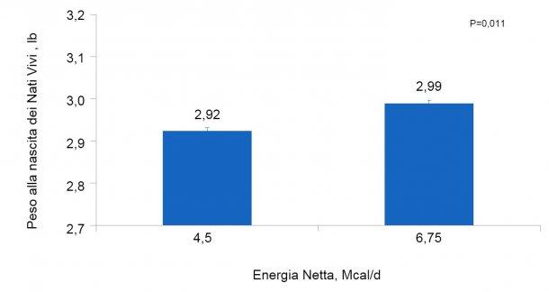 Figura 3. Effetti del consumo di diversi livelli di energia dal giorno 90 al giorno 111° della gestazione sul peso individuale alla nascita dei suinetti nati vivi di scrofette e scrofe.