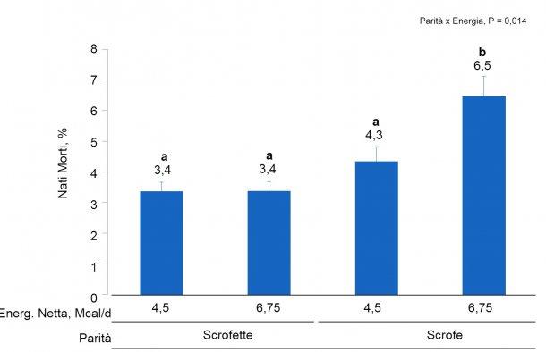 Figura 2. Effetti del consumo di diversi livelli di energia forniti dal giorno 90 al 111° della gestazione sul tasso di nati morti di scrofette e scrofe. Le medie con un super-indice differente all'interno del livello di parità (N° di parti) sono differenti(P <0,05).