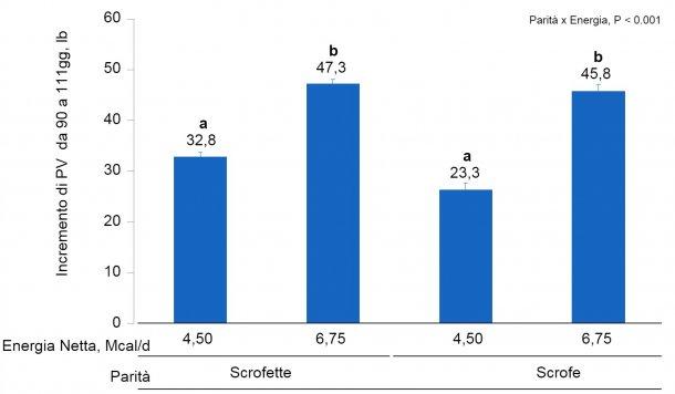 Figura 1B. Effetti dell'alimentazione con diversi livelli di energia dal giorno 90 al 111° della gestazione sul guadagno di PV di scrofette e scrofe Le medie con un super-indice differente all'interno del livello di parità (N° di parti) sono differenti(P <0,05).