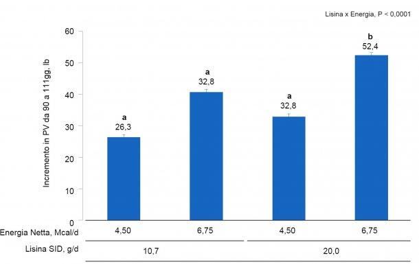 Figura 1A. Effetti dell'alimentazione con diversi livelli di lisina ed energia dal giorno 90 al giorno 111 della gestazione sull'incremento di PV di scrofette e scrofa. Le mediecon un super-indice differente all'interno dei livelli di Lis SID sono differenti(P <0,05).