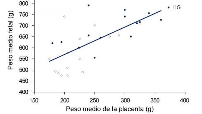 Grafico3. Sia nel gruppo controllo (CTR) sia nel gruppo legato(LIG), gruppo di scrofe il cui ovidotto fu legato, il peso dei feti fu correlato al peso della placenta. (Town, 2005).