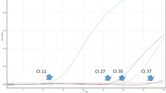 Descrizione: Figura 1. Il ciclo soglia (Ct) è il primo numero del ciclo di una PCR in tempo reale in cui viene rilevata la fluorescenza che indica la presenza del patogeno ricercato nel campione. Più basso è il valore di Ct, maggiore è la quantità di agente patogeno nel campione analizzato. Valori di Ct molto alti dovrebbero essere interpretati con cautela, poiché possono derivare dalla degradazione spontanea di una sonda TaqMan negli ultimi cicli, nonostante la mancanza del DNA target nel campione.