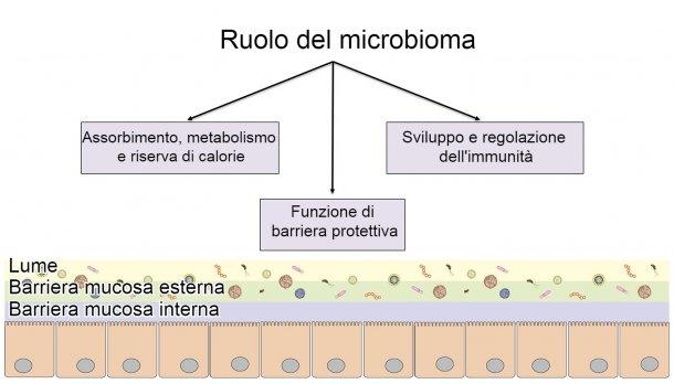 Funzioni del microbioma: barriera intestinale, digestione e metabolismo dei nutrienti e regolazione dell'immunità.