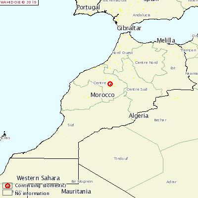 afta epizootica in Marocco