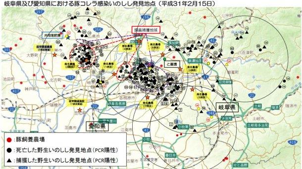 El mapa muestra el total de jabalíes encontrados muertos o capturados positivos para la enfermedad así como las explotaciones porcinas afectadas (subrayadas en amarillo), hasta 15 de febrero de 2019.