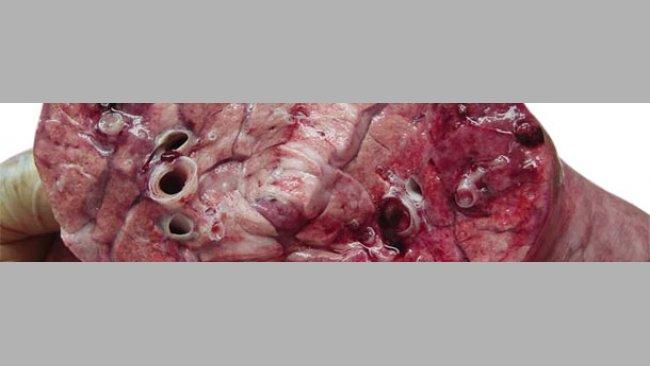 Corte de un pulmón