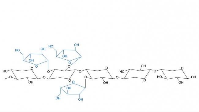 Figura 3. Struttura chimica degli arabinoxilani. Le ramificazionidi arabinosio e la loro distribuzione variano tra i cereali e tra le varietà dello stesso cereale.