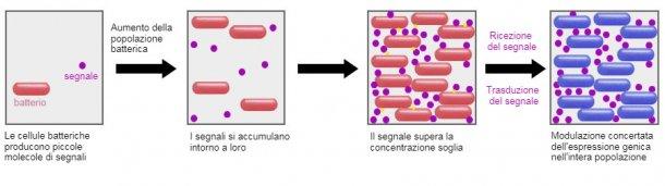 Un sistema promettente è la capacità di influenzare il meccanismo di segnalazione tra i batteri (Quorum sensing) attraverso alcuni probiotici. In questo modo, può essere impedito di attuare strategie di sopravvivenza comuni come la formazione di biofilm o la sporulazione in condizioni avverse.