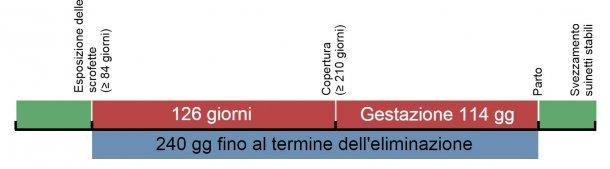 Figure 1. Cronologia dell'esposizione delle scrofette