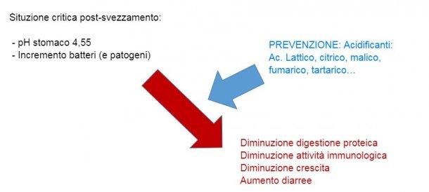 Figura 2: L'acidificazione del contenuto gastrointestinaleè anche una buona strategia per migliorare la digestione, specialmente nei suinetti dopo lo svezzamento perché la loro capacità endogena è molto limitata. Mediante l'incorporazione di un acidificante nella dieta, viene evitata una riduzione della digestione delle proteine e delle influenze nell'immunità e nei parametri produttivi.