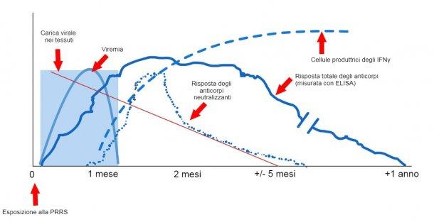 Grafico 1: Risposta del sistema immunitario di un suino infetto dal virus PRRS (López eOsorio, 2004).